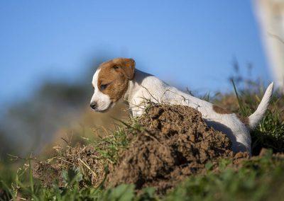 Cupcake climbing the dirt