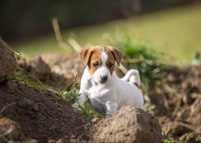 Sweetie in the dirt
